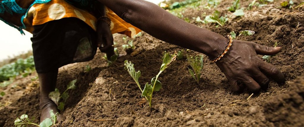 World Soil Day 2019 - National Awareness Days Events ...