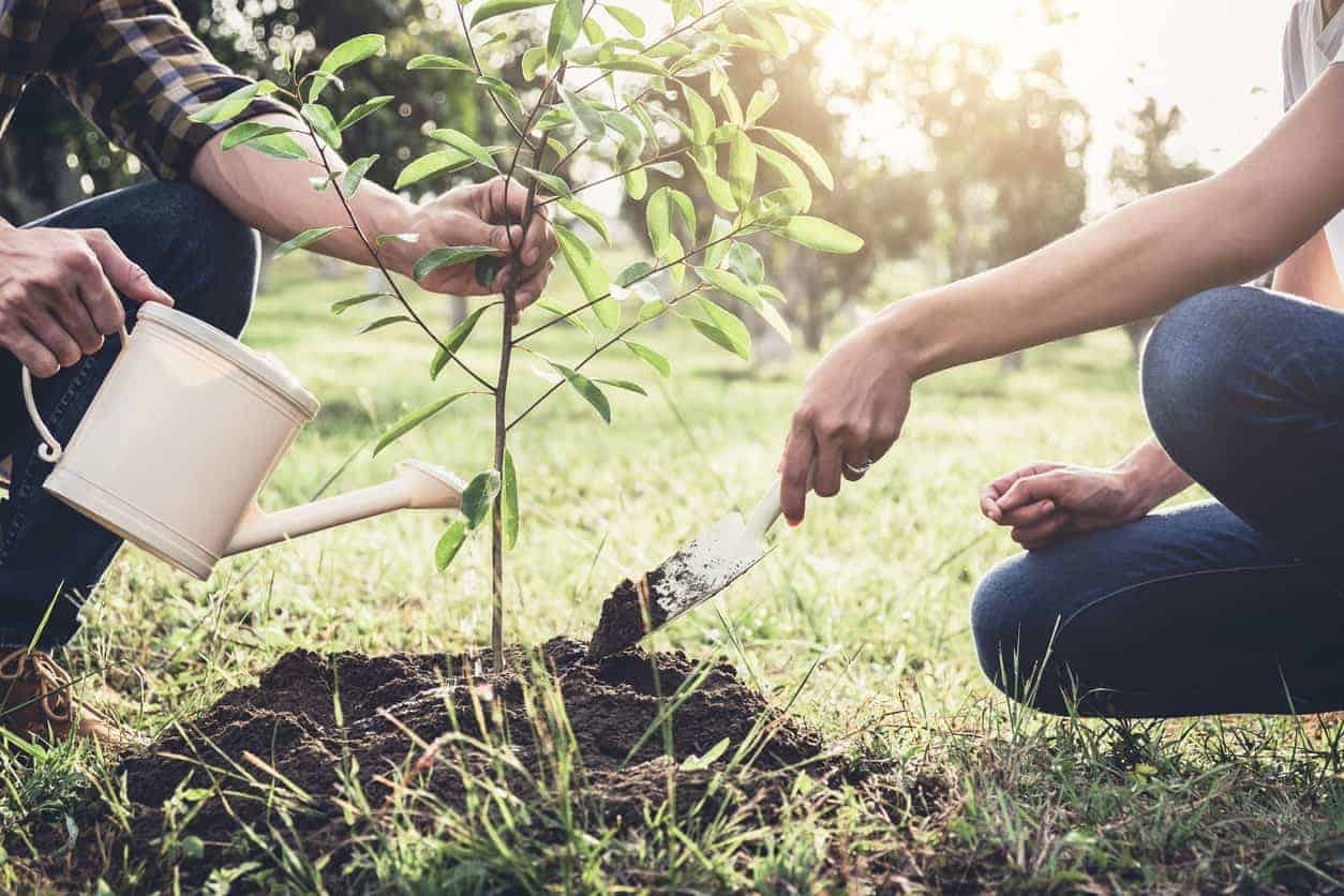 National Arbor Day In The Usa 2019
