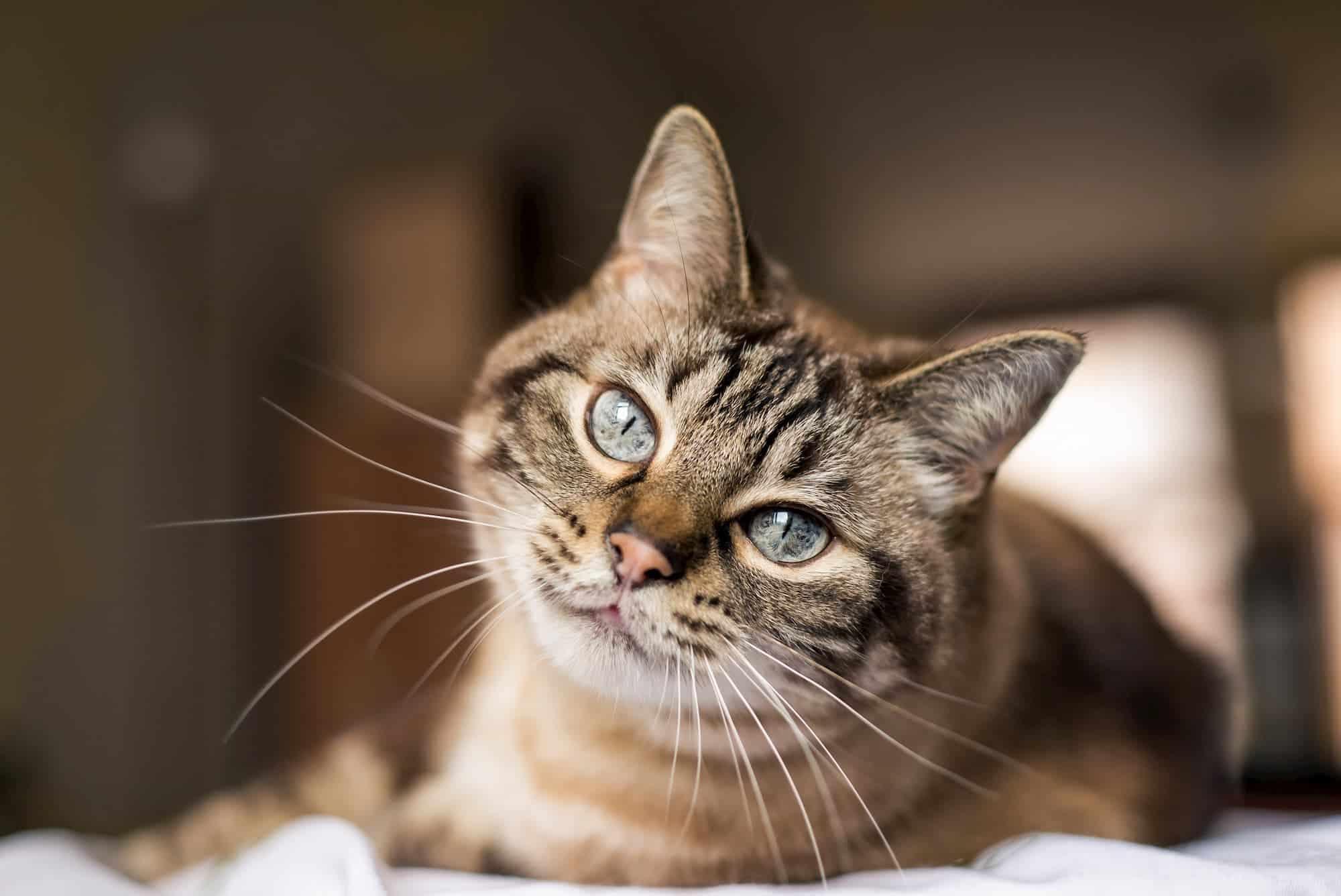 National Cat Day 2019 National Awareness Days Calendar 2020 2021